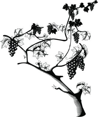 grapes 1d