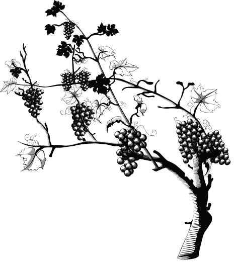 grapes5