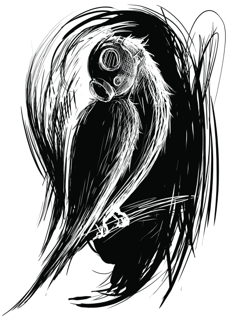 bird b