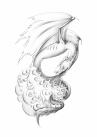 dragon sketch b