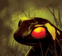 fire salamander