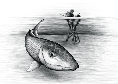 Bonefish sketchb